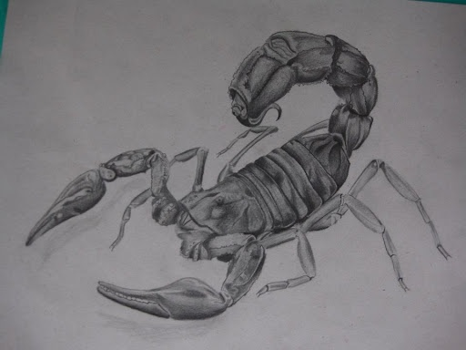 70 best images about Scorpion on Pinterest | Sketching ...