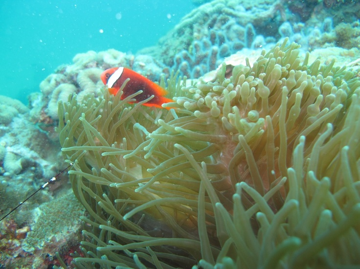 Contact +6281277081267 for snorkeling reservation