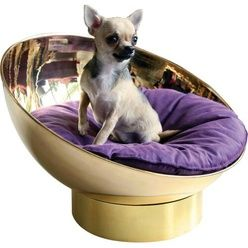 Man looks like a lot of money but its really cool and if I was rich and had a dog I would definitely do it! :)