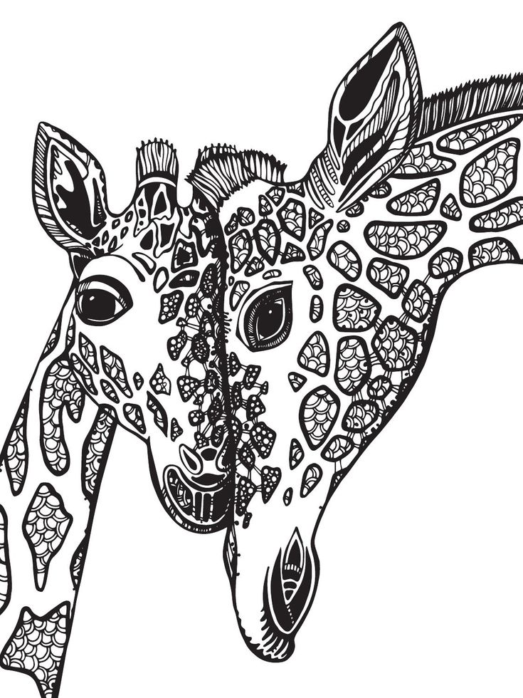 151 besten giraffes bilder auf pinterest  giraffen