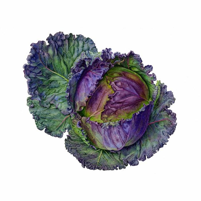 Carolyn Jenkins: Cabbage