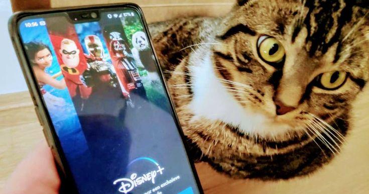 Download Disney Plus Movie To Laptop di 2020