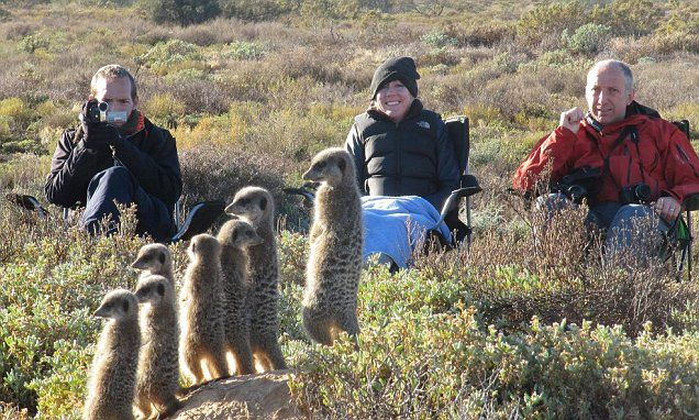 Forget big cats, tourists can get up close and personal to meerkats