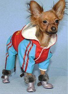 Выкройки одежды для собак: гардероб своими руками