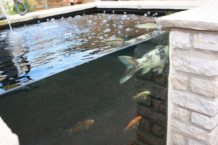 Les 25 meilleures id es de la cat gorie bassin carpe koi for Bassin de carpe koi