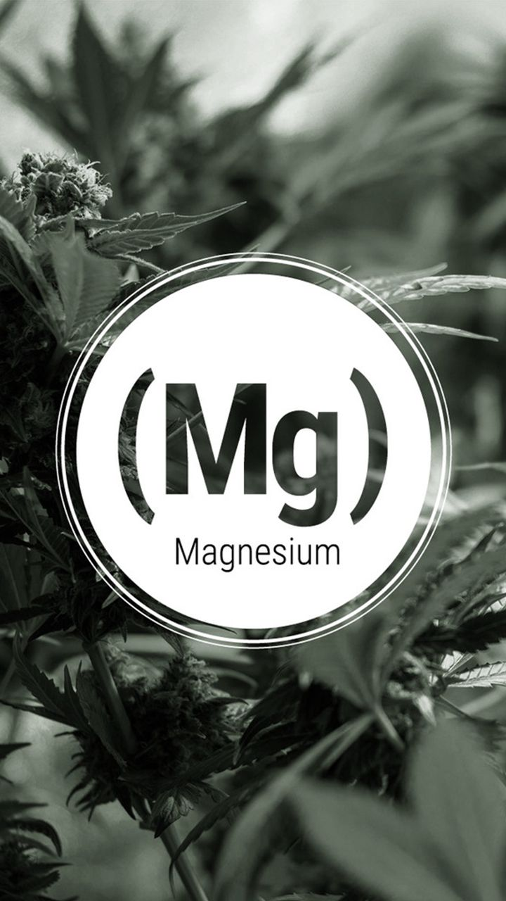 Magnesium deficiency too frequently stunts marijuana growth. Be it early in vegetative growth or late into the bloom cycle, this is one deficiency no grower wants. With our practical advice, magnesium deficiency can be avoided and overcome.