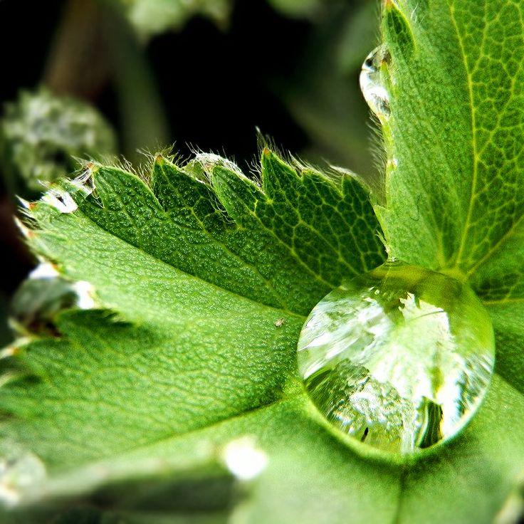 Nature. A closer look