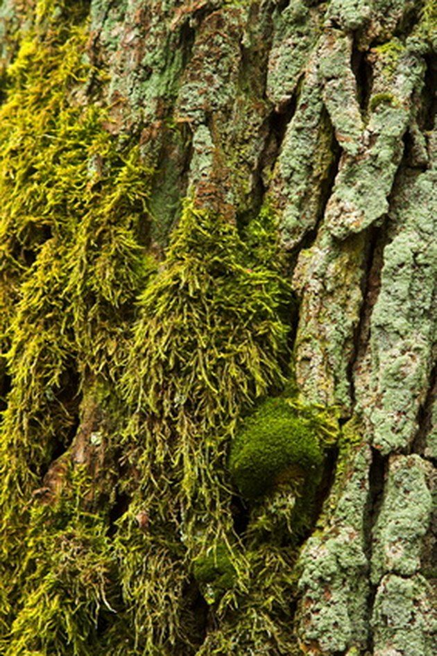 How To Remove Moss Lichen From The Roof With Vinegar Cleaning Hacks Clean Dishwasher Deep Cleaning Tips