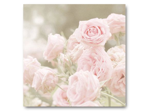 Pink Rose Photo, shabby chic, baby pink roses, soft, sage, moss green, antique, heirloom roses, soft pink photo, nursery art