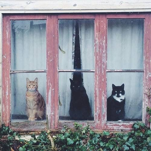 If you live across from theses guys....there is NO privacy....