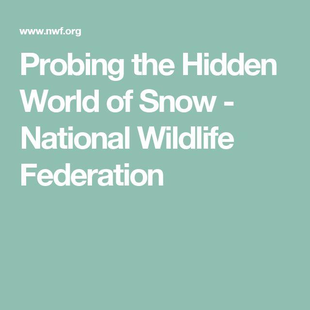 Probing the Hidden World of Snow - National Wildlife Federation