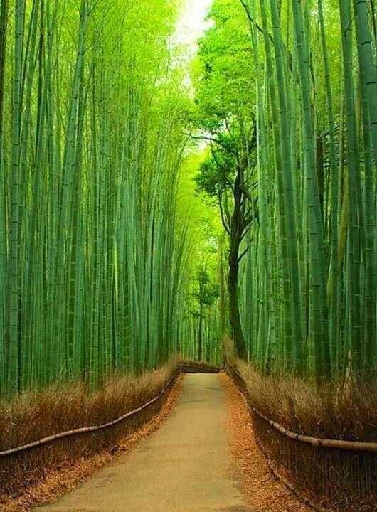 1.Bamboo Forest, Japan