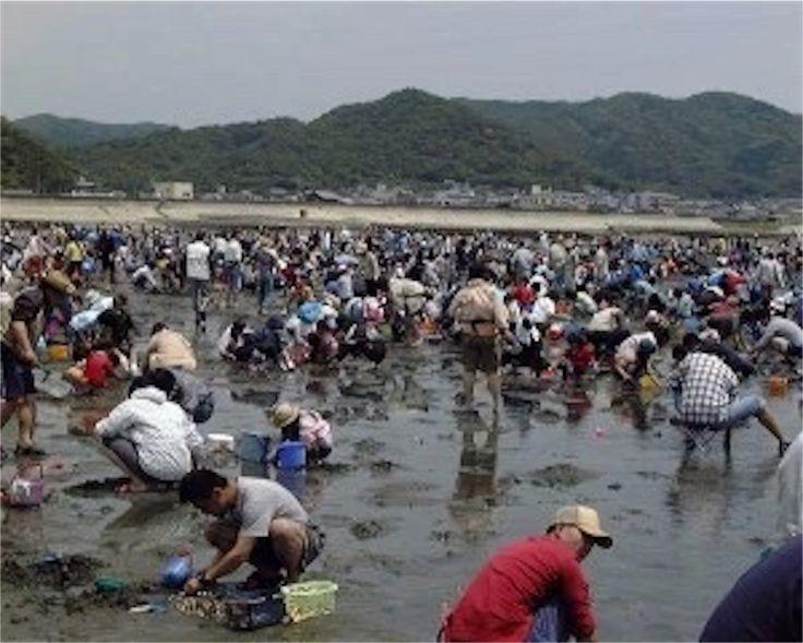 愛知県西三河地方 潮干狩り おすすめスポット