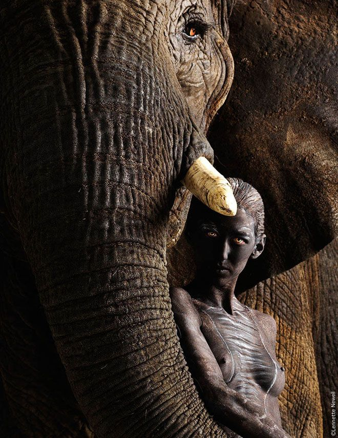 22 best elephants and beauties images on pinterest elephants elephants and beauties publicscrutiny Gallery
