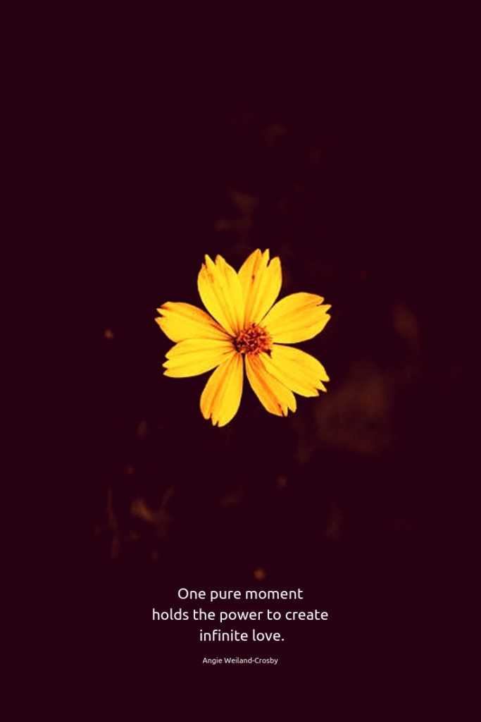 time for stillness flower quotes love flower quotes yellow quotes