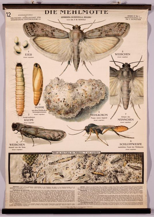 23 Best Insects Images On Pinterest Bugs Insects And Anatomy