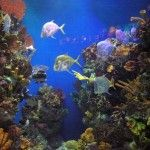 Hvis du ønsker å se på fisker og annet liv i havet kan et besøk på akvarium være flott. Dette er spesielt et fint program for familier med mindre barn og kan være en grei aktivitet på en regnsværsdag (som det er mange av i Brussel i løpet av ett år, se klima). For å ...Continue reading 'Akvarium' »