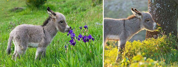 17 Absolutely Adorable Photographs of Animals Enjoying the Smell of Flowers