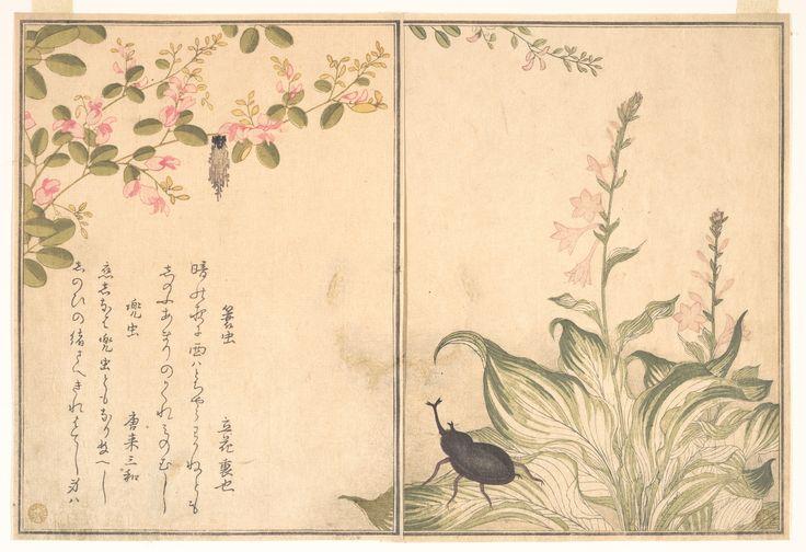 Kitagawa Utamaro: Bag-Worm and Horned Beetle (Minomushi and Kabutomushi), from Picture Book of Selected Insects with Crazy Poems (Ehon Mushi Erabi) - Metropolitan Museum of Art
