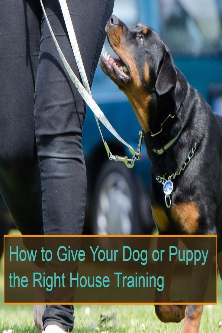 Dogtraining Dogs Do You Want To House Train Your Dog Or Puppy Go