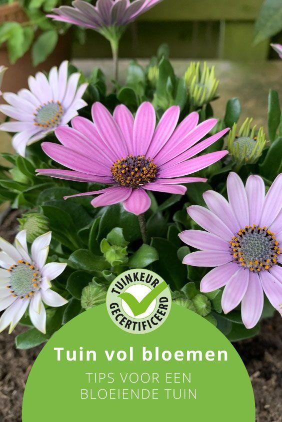 advies lieuwe een tuin vol bloemen tuinkeur in 2020