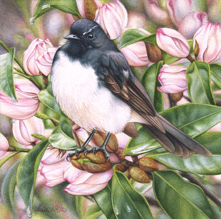 'Willie Wagtail' miniature continues on with my highly popular miniatures series of sentimental garden favourites, small birds and exquisite small works
