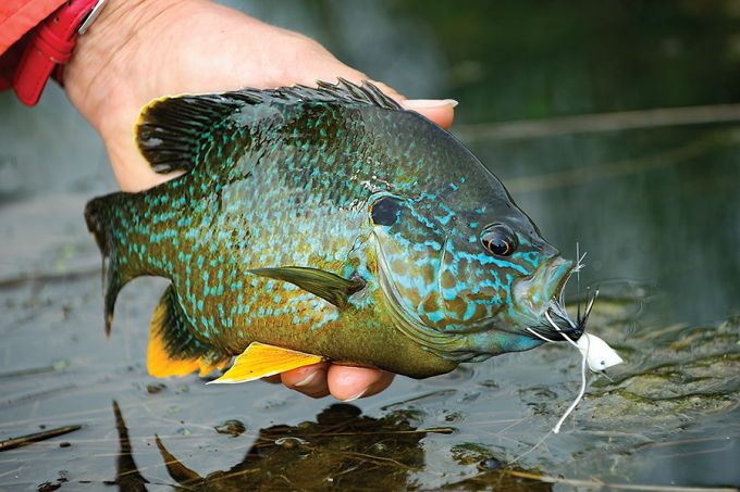 Fly Fishing For Panfish: How to Practice Your Technique | Field & Stream