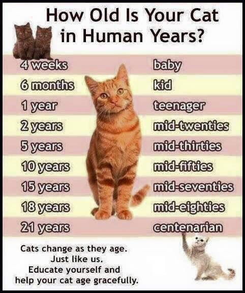 Human And Cat Video