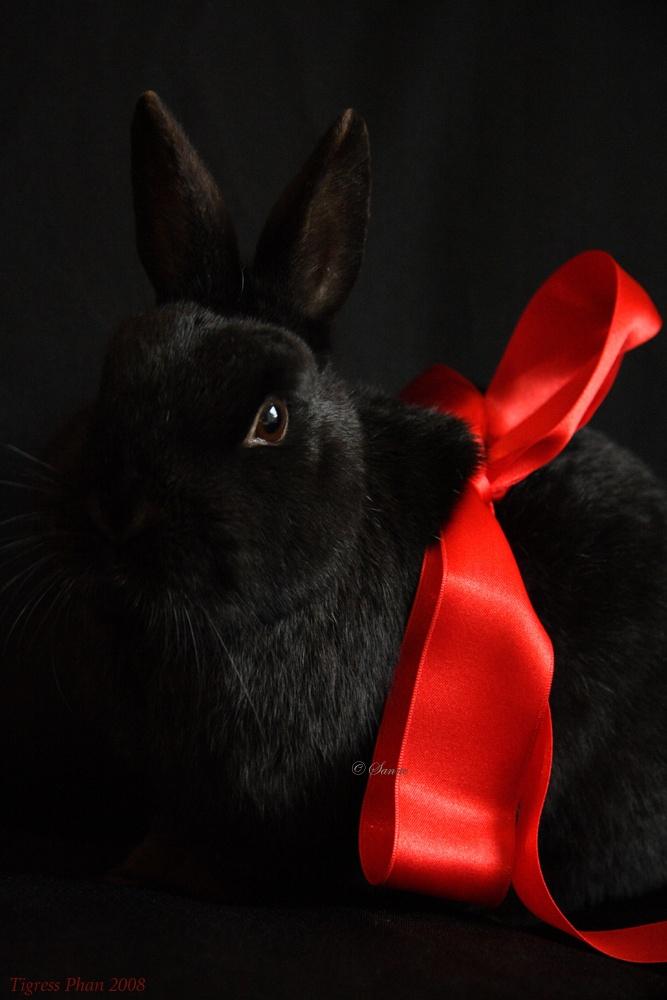 картинка красного кролика эксперименты
