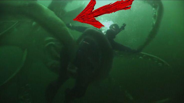 Is that a Kraken  - Google Earth a fotografiado al Kraken