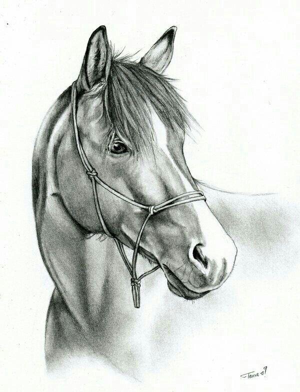 Rysunek ołówkiem - koń | Rysunki , szkice | Pinterest