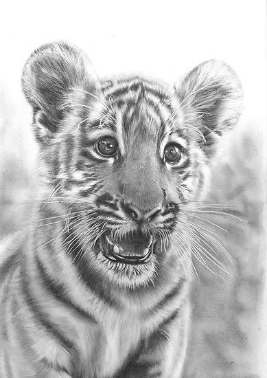 Tiger cub pencil drawing