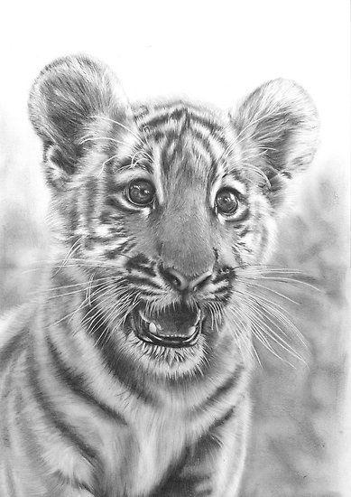Tiger cub pencil drawing
