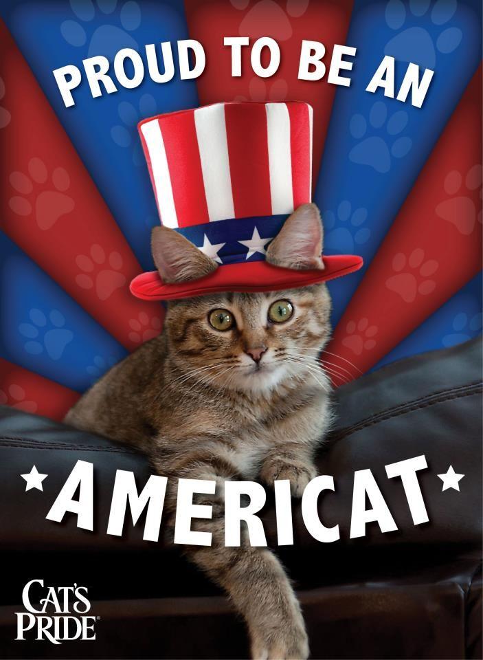 4th of july cat meme