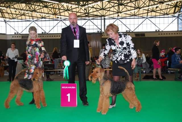 Amsterdam Winner Show 2015 / Airedale Terriers