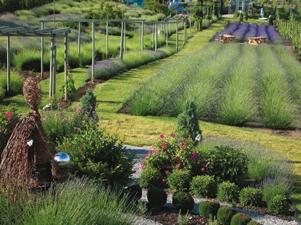 Okanagan Lavender Herb Farm, BC, Canada. Currently, there are only two regions in Canada that grows lavender in abundance, and they are the #Okanagan Valley and the Eastern Townships, in Quebec. But, major plans are on the way to grow Lavender right across the country. BC, Canada