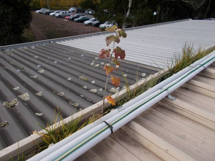 A great image from Gutter-Vac Geelong, who were called in to clean up these gutter growths.  Call 1300 654 253 or visit www.guttervac.com.au for a free, no obligation quote.