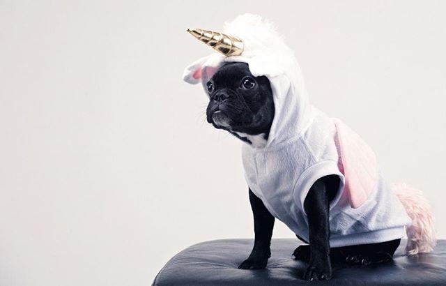 Sometimes You Have To Be Bold Pug Puppy Unicorn Unicorn