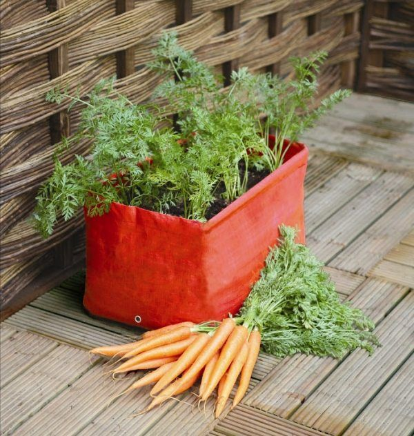 Die 25+ Besten Ideen Zu Balkongemüse Auf Pinterest | Balkongarten ... Pflanzen Kultivieren Aromatische Gewurze Garten