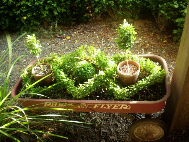 Radio flyer knot garden this might actually be doable for for English knot garden designs