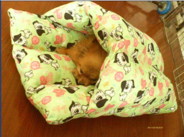 What a sweet pet bed!