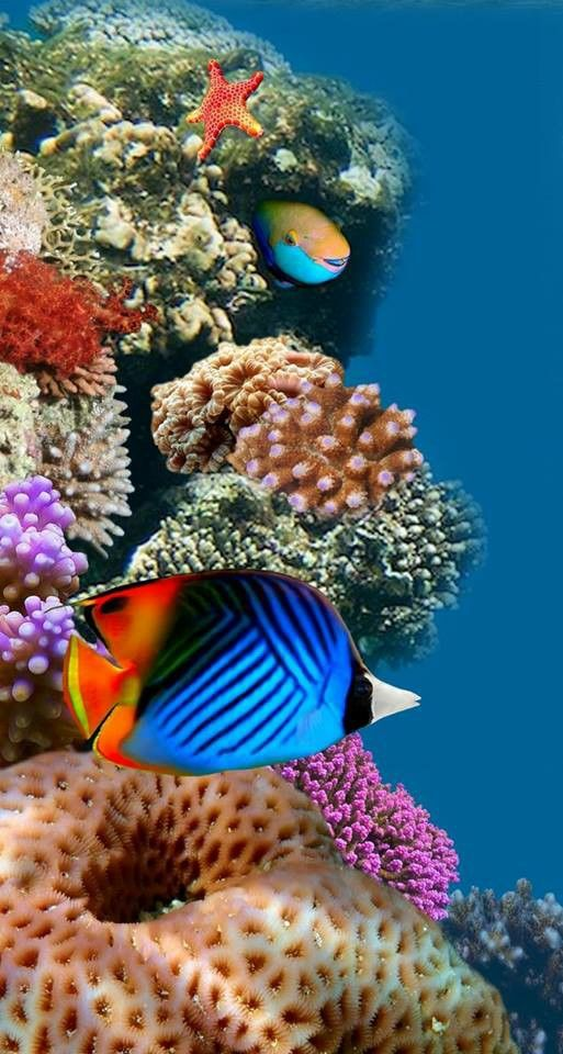 151 best images about under the sea on pinterest for Colorful tropical fish