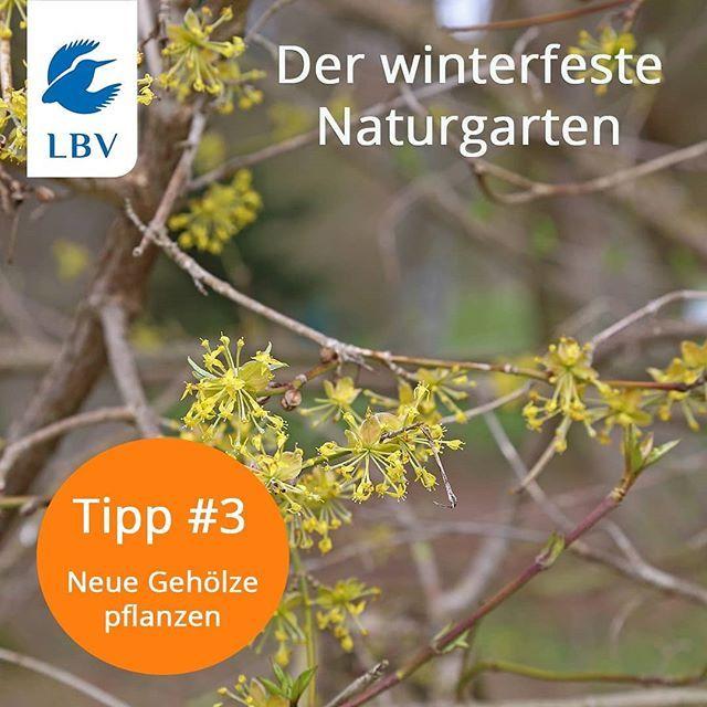 Auch Neue Geholze Konnen Jetzt Im Herbst Gepflanzt Werden Besonders Empfehlenswert Fur Den Naturgarten Sind Fruhbluhen Naturgarten Garten Pflanzen Gartentipps