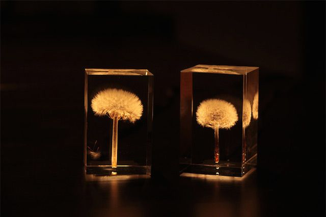 """Dandelion Lights by Takao Inoue – Tampopo lamps (""""dandelion"""" in Japanese) were created by Japanese artist Takao Inoue and exhibited at Milano Salone earlier this year. Real dandelions were integrated and suspended into an acrylic block with a OLED miniature light fixed into the stem. A beautiful object."""