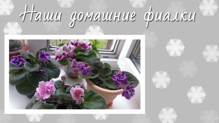 """Наши домашние цветы ФИАЛКИ (стиль """"стеклянная рамка"""")"""