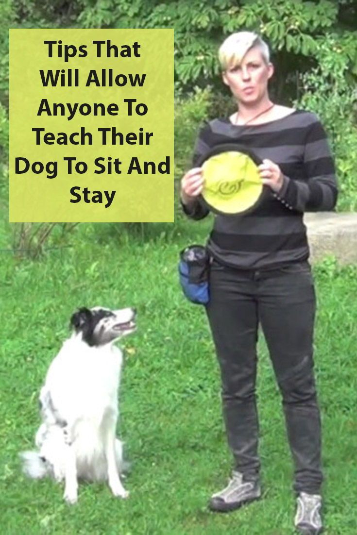 Teach Your Dog The Sit Stay Command A Step By Step Guide Your
