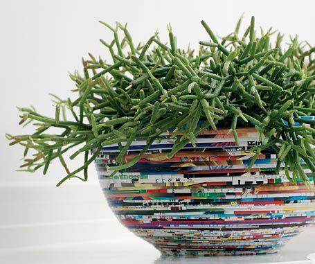 250 best images about zimmerpflanzen auf pinterest for Topfblumen wohnzimmer