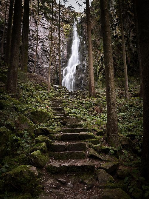 The Black Forest, Germany ♥ #bluedivagal, bluedivadesigns.wordpress.com