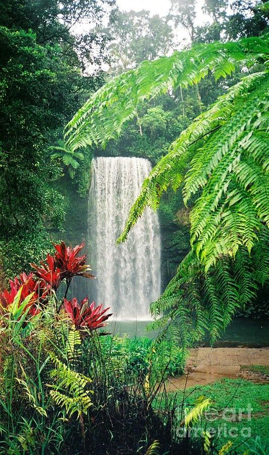Milaa Milaa Falls - Australia