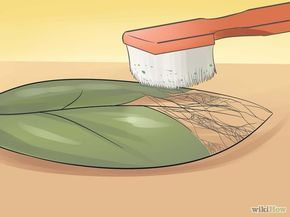 how to make leaf skeletons either with washing soda or biological detergent